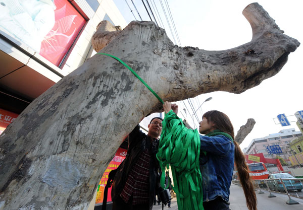 Fate of Nanjing's trees firmly rooted among the public