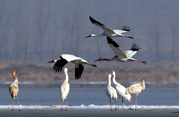 White Crane dance takes flight
