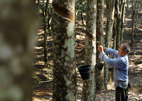 China S Rubber Sector Stretched To The Limit