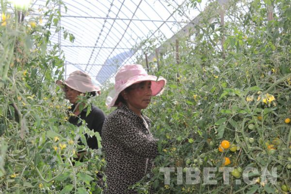 China becomes world's second largest agricultural ...