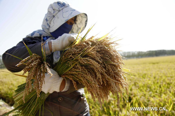China to maintain high grain output in 2014-2023
