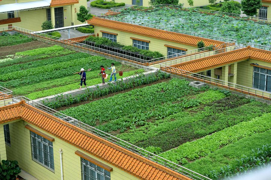 Roof Garden In Liuzhou 6 Chinadaily Com Cn