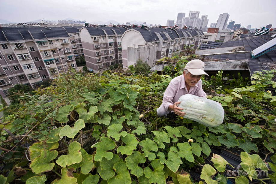 Yuan Chuanhua, 78, has a vegetable garden on the roof which provides ...