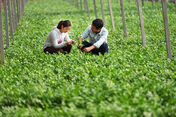 Entrepreneurial opportunities bring young Chinese back to countryside