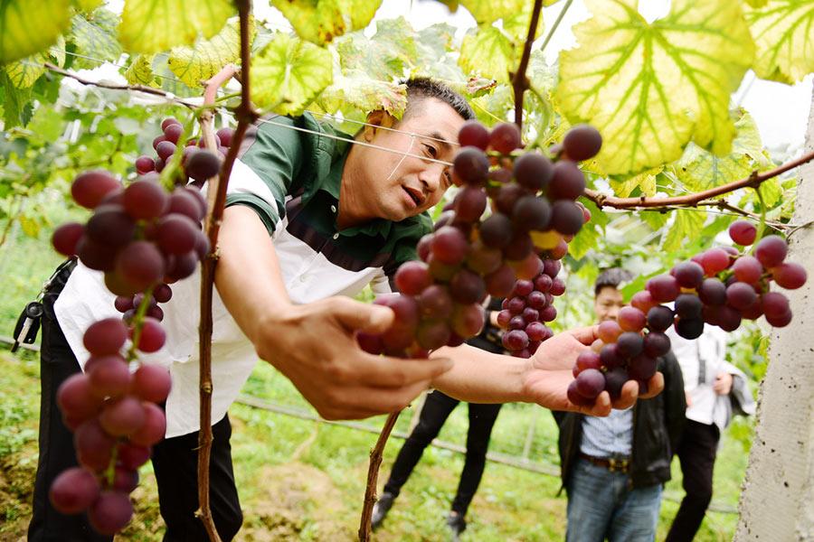 grape money services