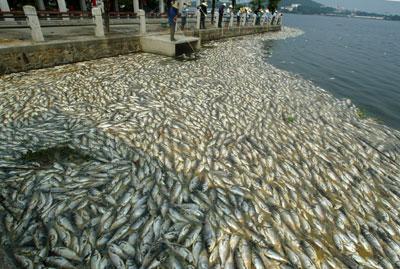 China lake dead fish