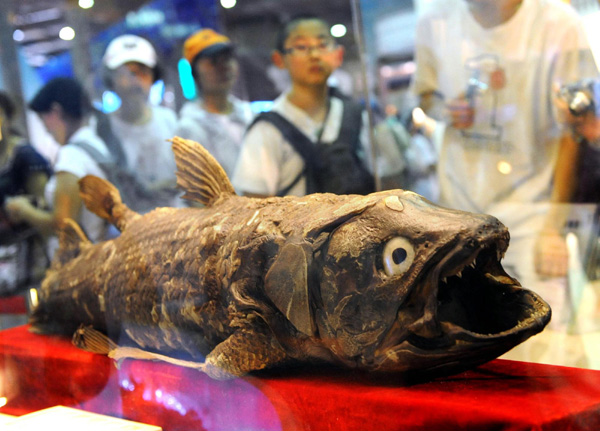 Creature from ancient times displayed at&nbsp;Comoros stand