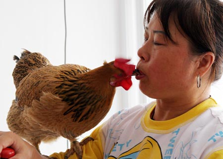 a rooster that knows math - keenglish - keenglish 的博客