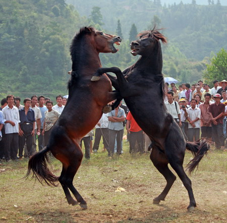 Villagers look on as two horses battle with each other in a local horse