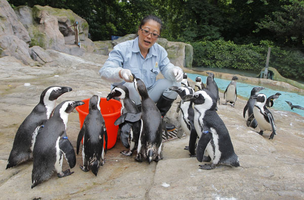 Penguin caretaker one cool customer