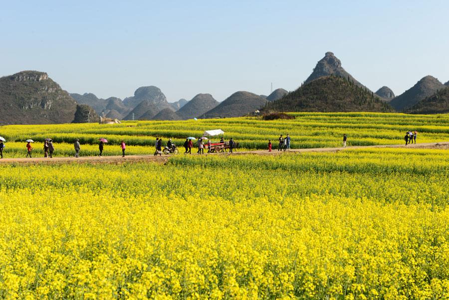 Spring Flowers Blossom On Spring Festival 4 Chinadaily Com Cn