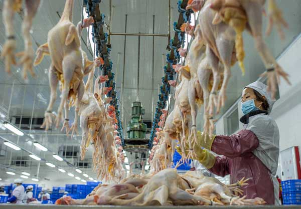 Phenomenal Live Poultry Markets To Be Closed In S China China Download Free Architecture Designs Rallybritishbridgeorg