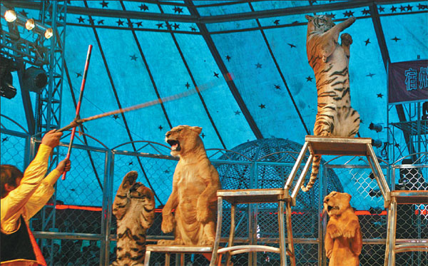 Suzhou (Anhui) China  City pictures : Tigers and lions at an international circus festival in Suzhou, Anhui ...