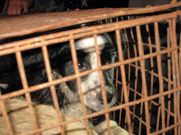 Concern for animal welfare spells the end of dog meat restaurants