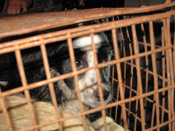 Concern for animal welfare spells the end of dog meat restaurants