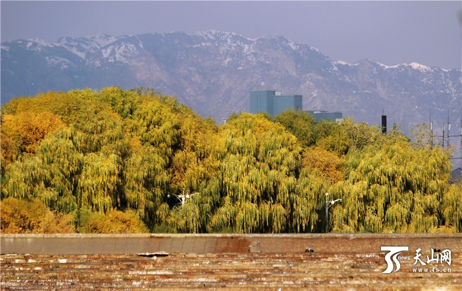 Korla China  city pictures gallery : Korla takes on a new look under ecological progress[4] Chinadaily.com ...
