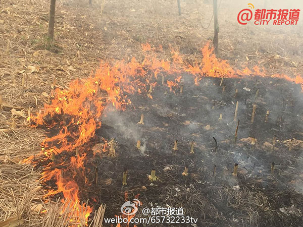 Zhoukou China  City pictures : Local villagers burn straws in Taikang county, Zhoukou, Henan province ...
