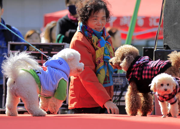 China's pet tally reaches 100 million, mostly cats and dogs