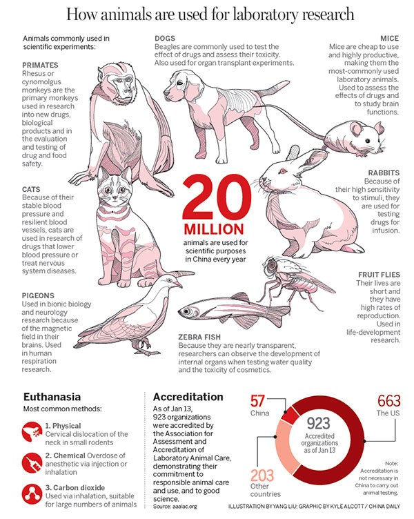 animal testing introduction