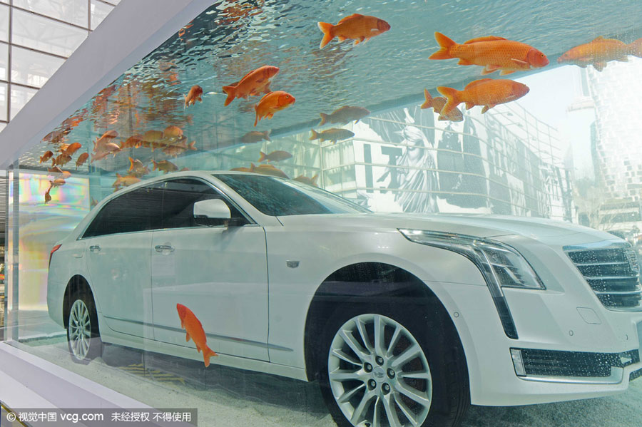 a fancy car debuts inside a huge fish tank in shanghai on wednesday feb 24 2016 with some one hundred red carps swimming around it
