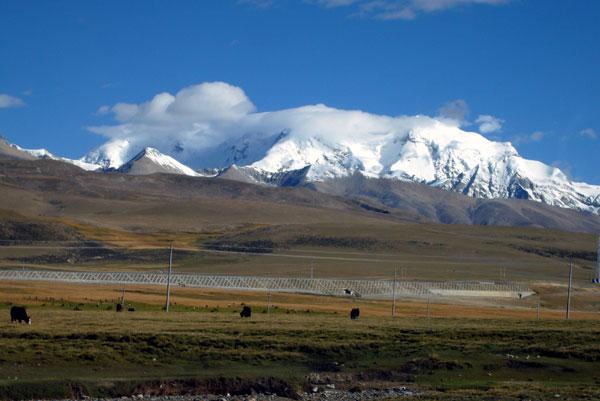 some tibetan plants can predict indian monsoon - china