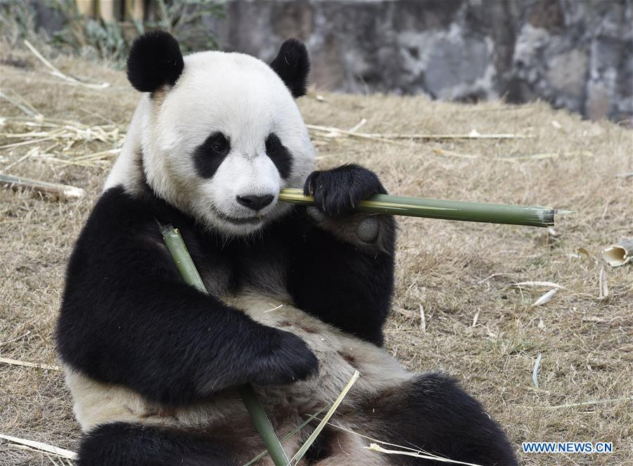 Two Giant Pandas Leave China For New Home In ROK 1