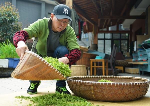 Online sales effort highlights tea's growing popularity