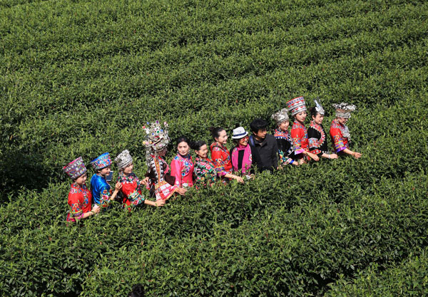 China's 'golden' tea worth more than gold