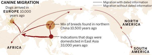 dogs first domesticated in china china chinadaily com cn