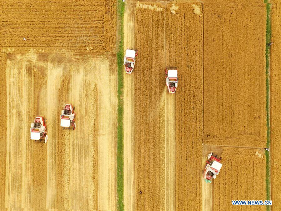 网络赌博:收割机收获小麦在日照,山东中国