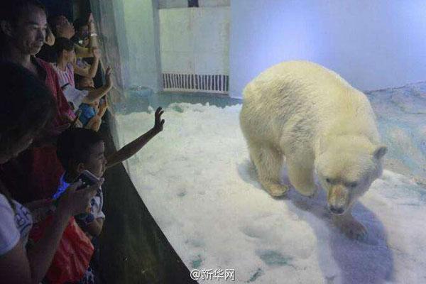 Mall housing 'World's Saddest Polar Bear' denied zoo expansion plan