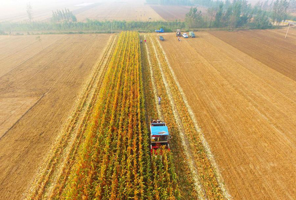 Meicai: a Chinese startup that helps farmers sell ...  |China Farmland