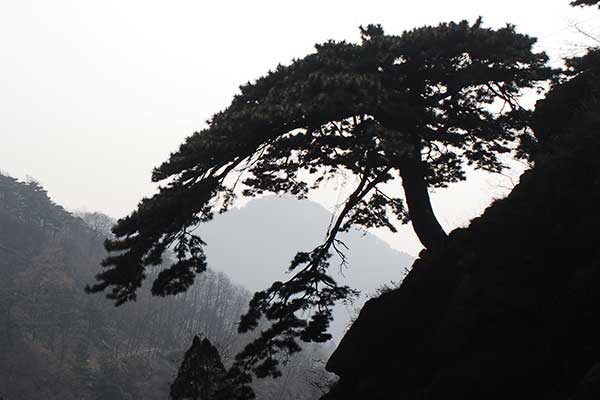 Data for Mount Tai's ancient trees stored on digital ID cards