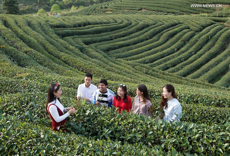 Foreign students learn tea ceremony at East China's college[1