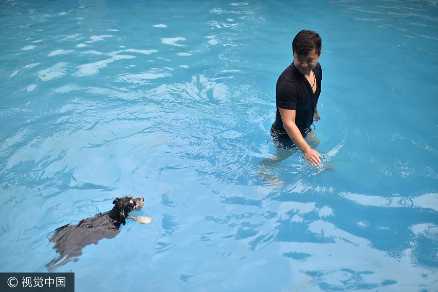 Man builds 2 000 square meters swimming pool for dogs 1 for How many meters is a swimming pool