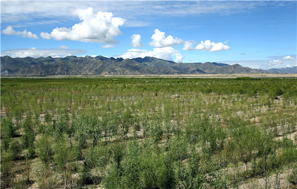Tree planting project turns barren, windy land into oasis