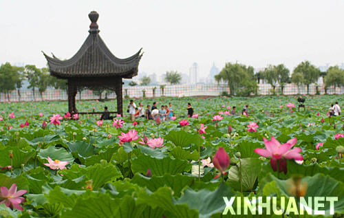 Lotus Flower Show Opens In Central China