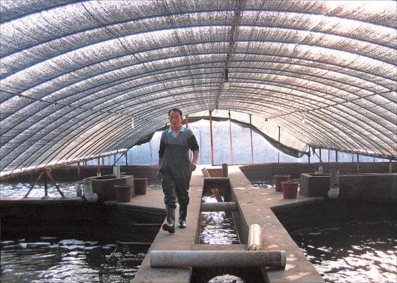 Eel Breeding | Slippery Charges Land Eel Farmers In Fishy Net