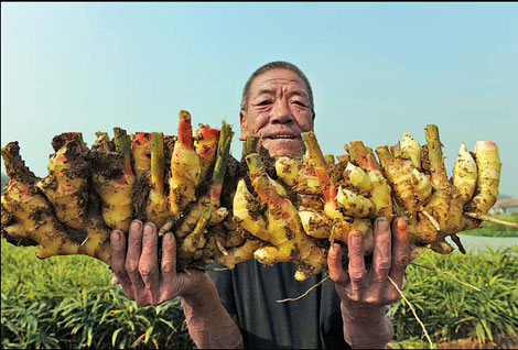 The price is right as ginger growers enter cooperatives