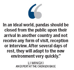 Pandas may find traveling hard to bear