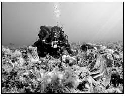 海洋是一个巨大的生化武器倾倒场。我们能不能趁现在抓紧清理一下?.jpg