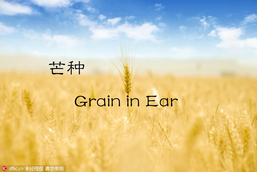24 Solar Terms: 7 things you may not know about Grain in Ear[1]