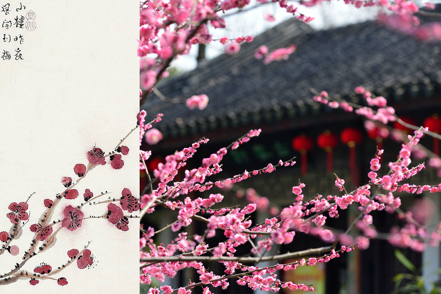 Poetic Beauty 10 Most Significant Flowers In China