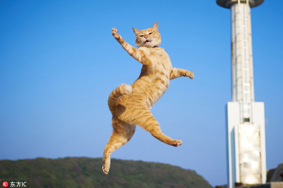 Cute cats pose like chinese kung fu fighters1 chinadaily cute cats pose like chinese kung fu fighters voltagebd Images