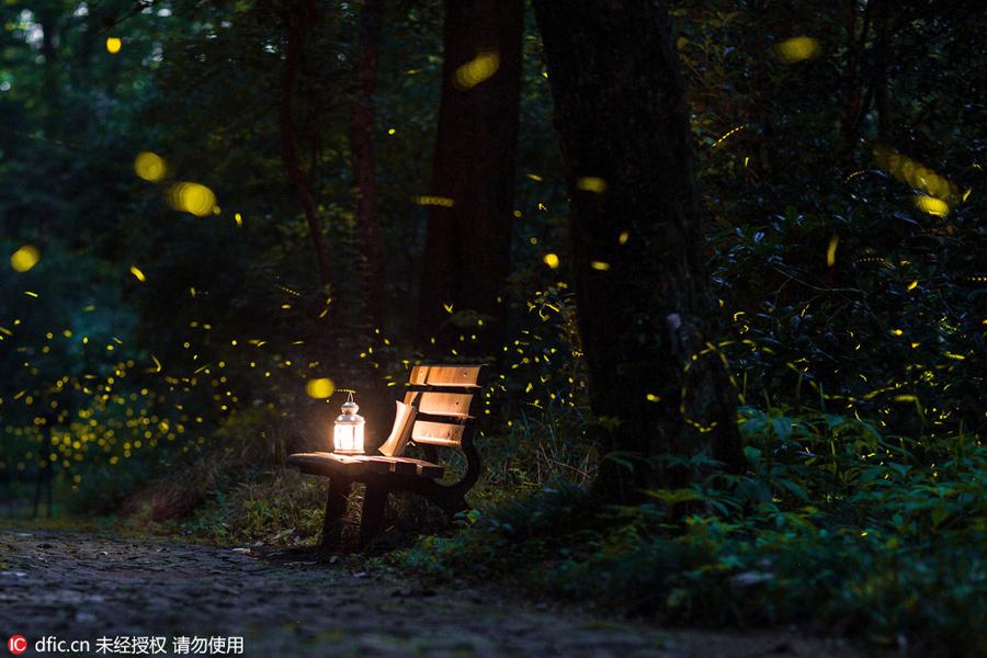 Magical Firefly Lit Shots Of Nanjing Linggu Temple 2