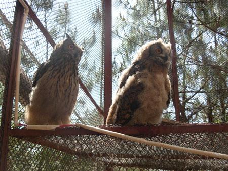 昆明市野生动植物保护协会主办