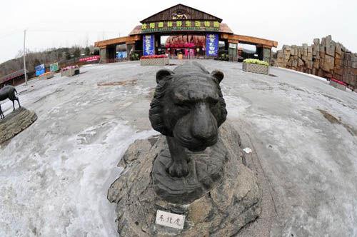 沈阳野生动物园11只东北虎营养不良死亡(图)