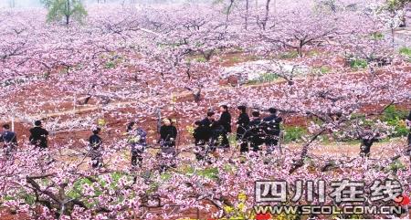 1987年,成都市政府将龙泉花果山列为市级风景名胜区(本报资料图片)