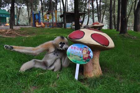 云南野生动物园的光棍动物全球征婚