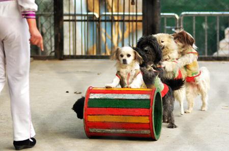 郑州市动物园的小狗在表演(向明超 摄)